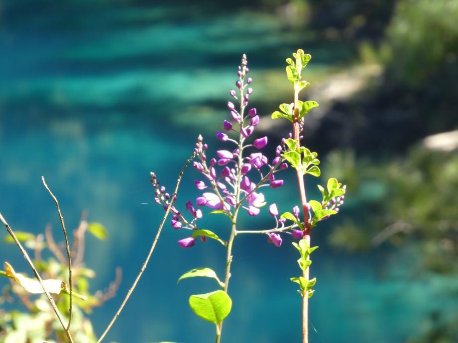 flore-des-lagos-de-montebello
