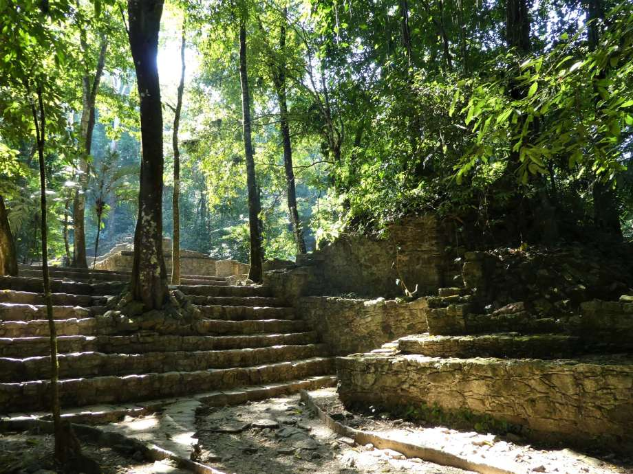 jungle-a-palenque