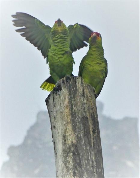 accueil-matinal-des-perroquets