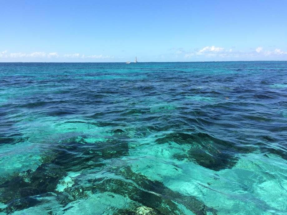 coral-garden-caye-caulker