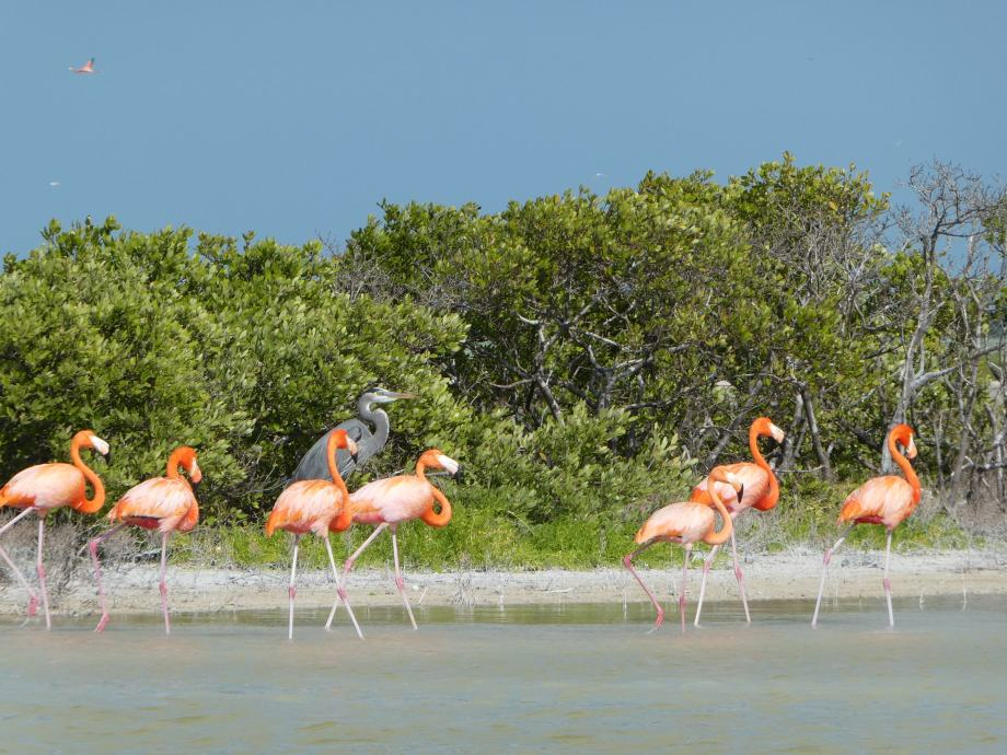 encore-des-flamants-rose