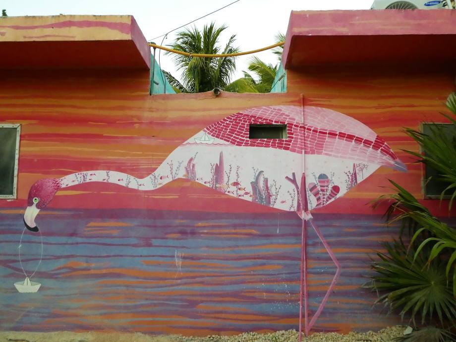 flamenco-isla-holbox