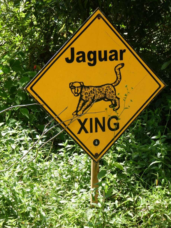 pas-de-jaguar-en-vue