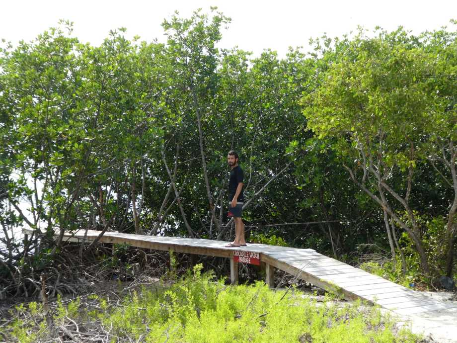 pont-des-crocodiles