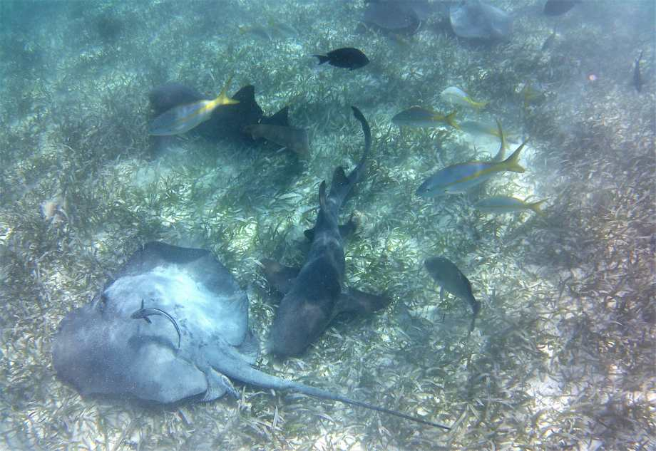shark alley, caye caulker.jpg
