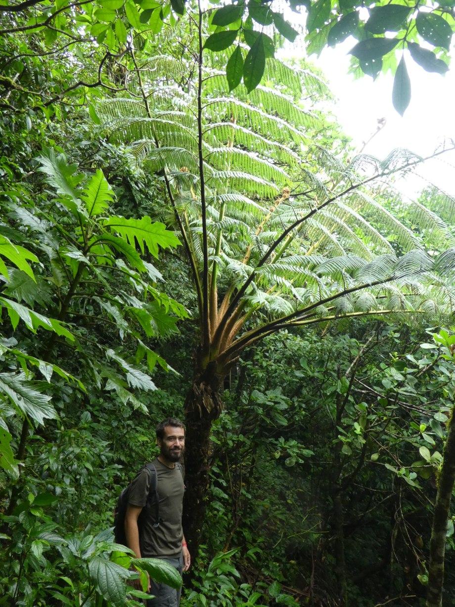 Végétation du Mombacho
