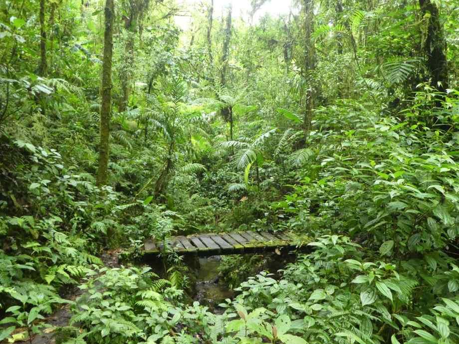 bosque santa elena-
