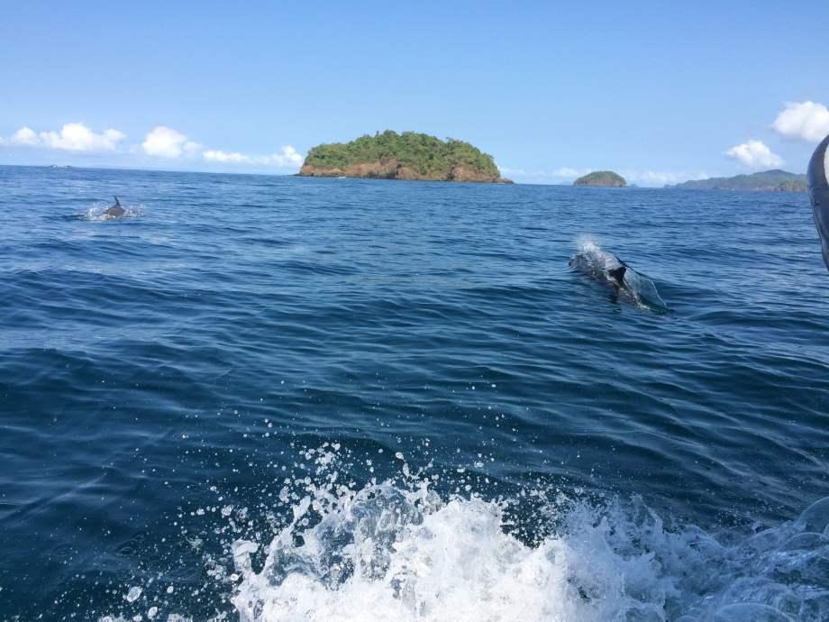 des dauphins!
