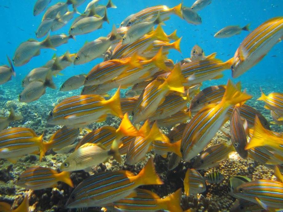 fonds marins de Coiba