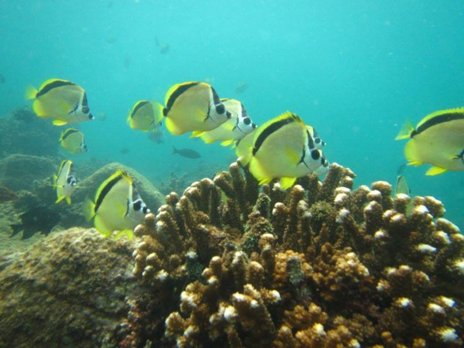 fonds marins de Coiba -
