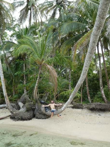 Jb posey sous les cocotiers