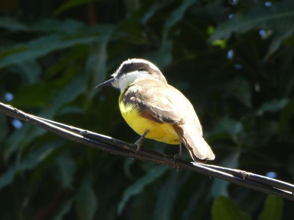 joli oiseau