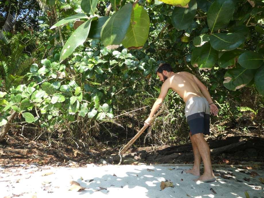 la chasse aux iguanes