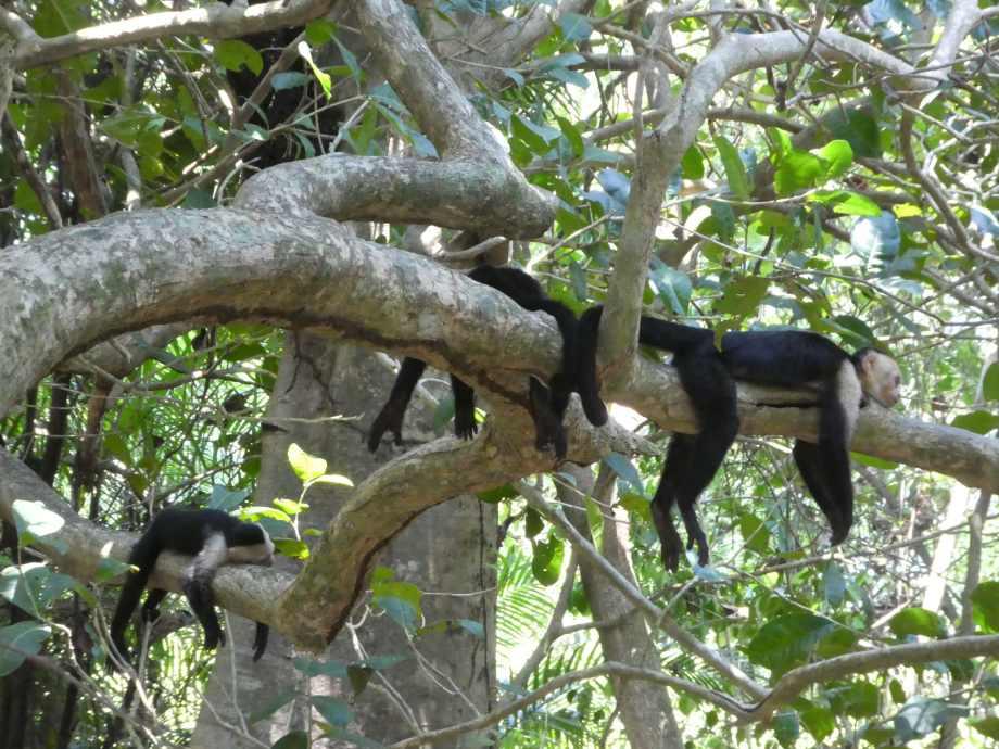 relax les singes