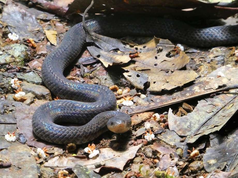 serpent à nos pieds -