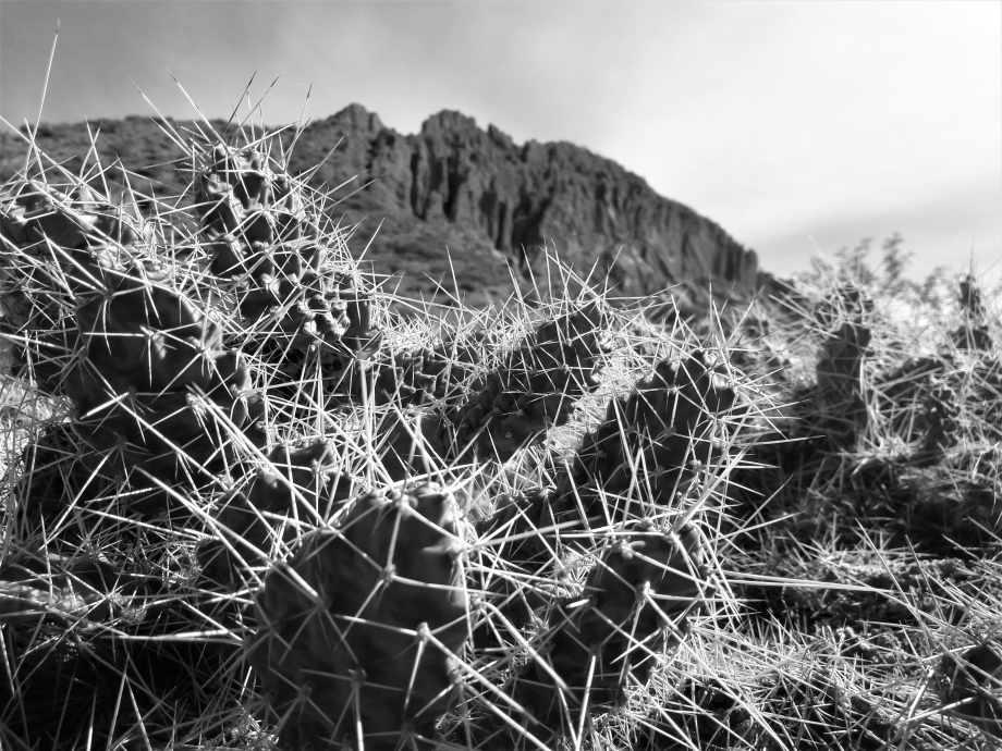cactus (2).jpg