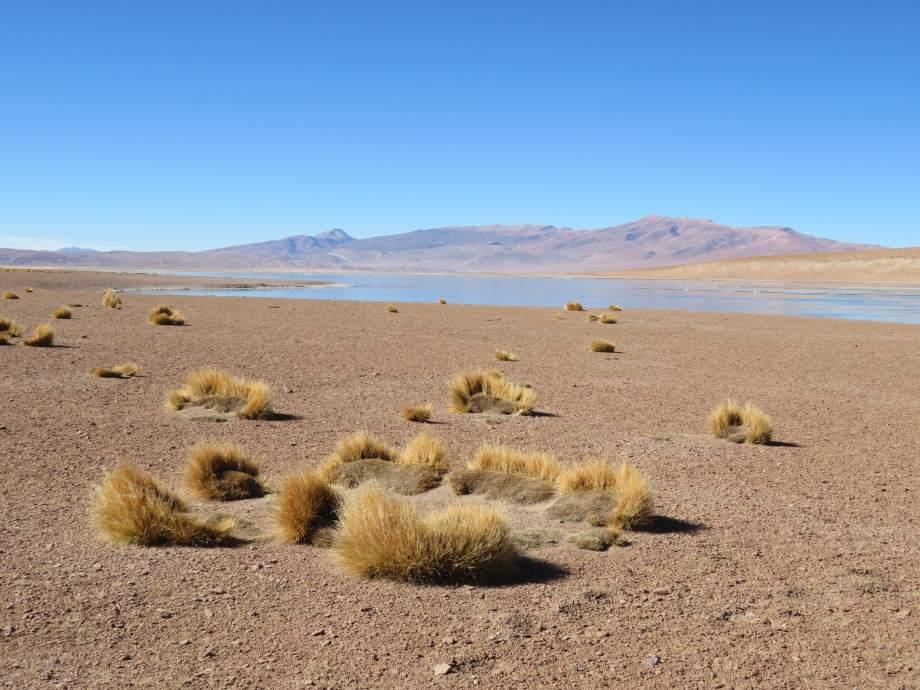 désert de l'altiplano
