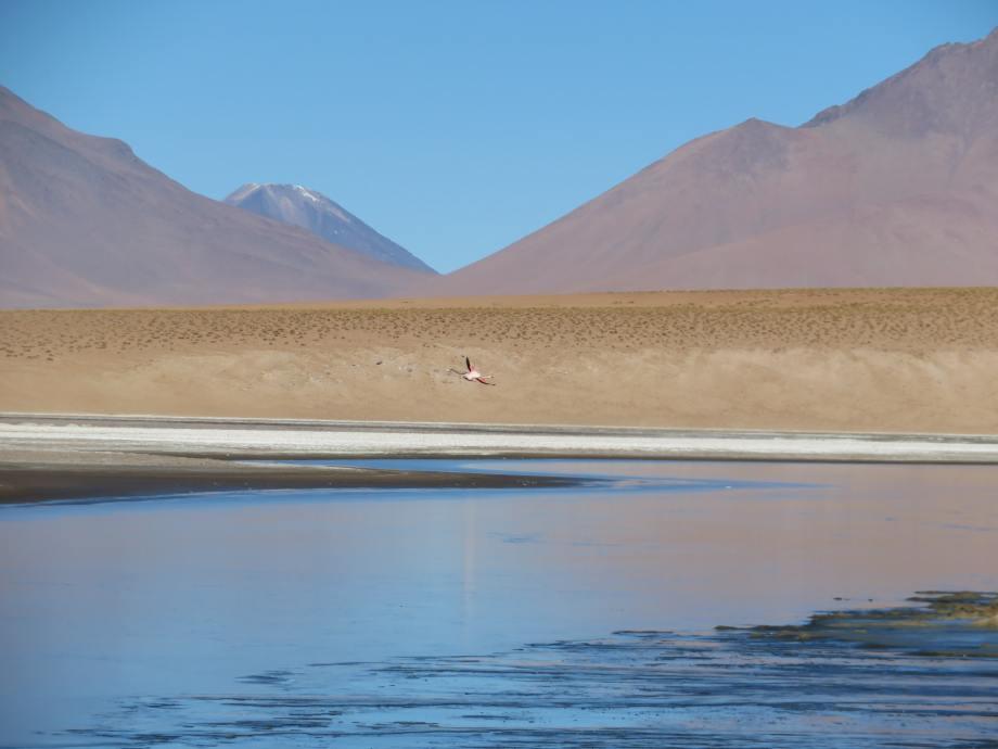 flamant sur la lagune