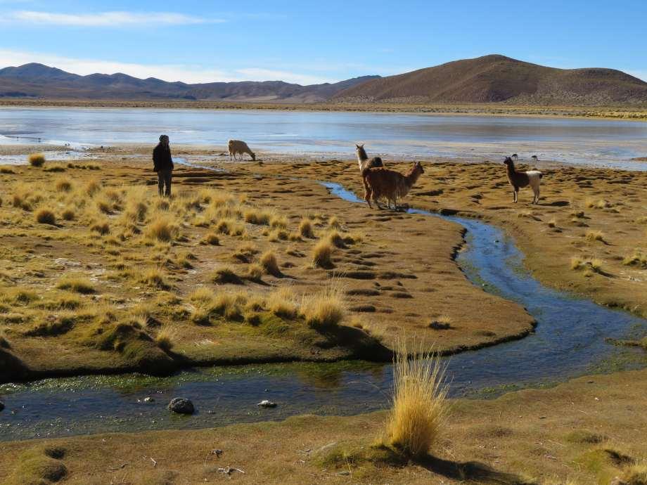 JB avec les lamas