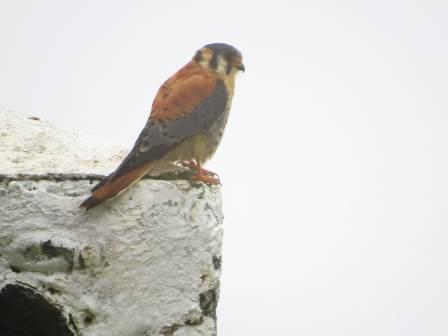 joli oiseau -
