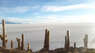 l'île aux cactus --