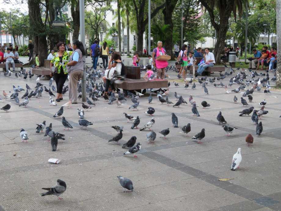 pigeons sur la place