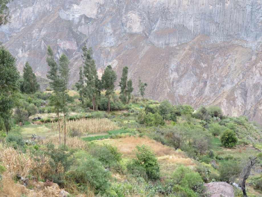 champs en terrasse