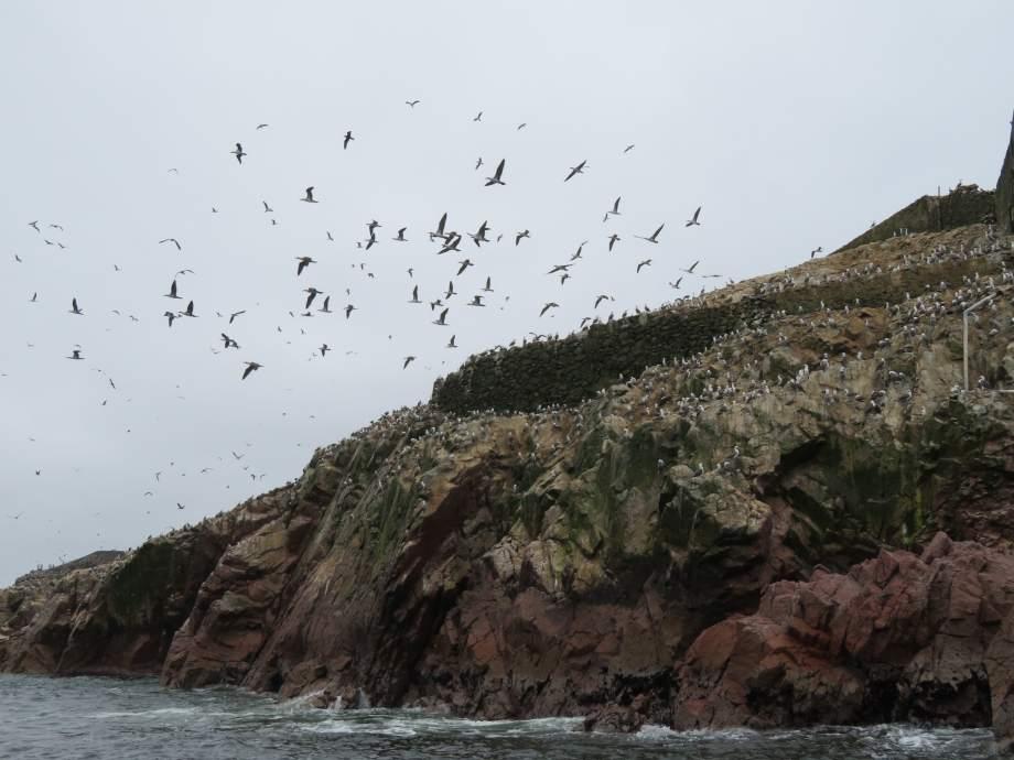 des miliers d'oiseaux (1)