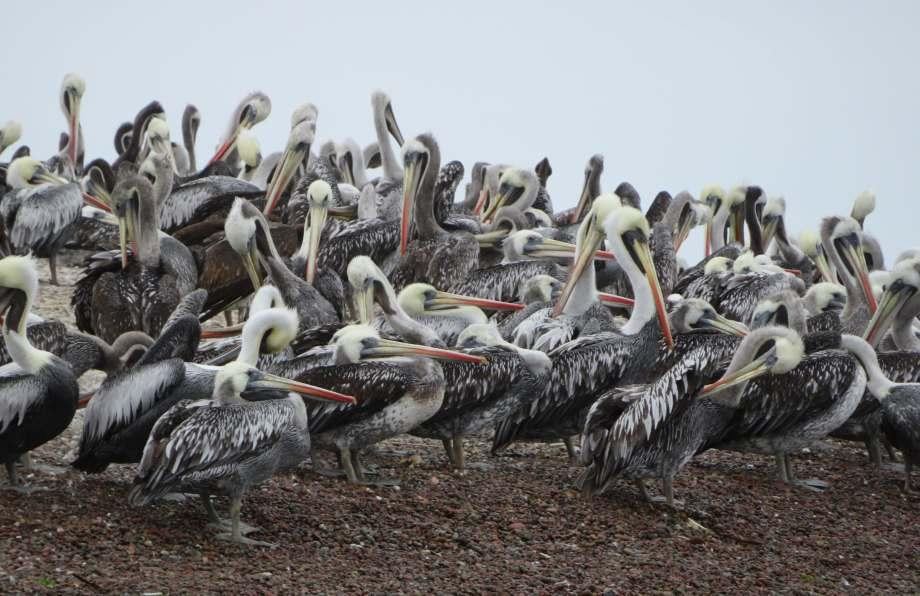 des miliers d'oiseaux (2)