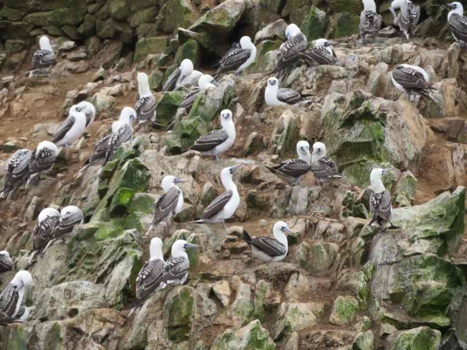 des miliers d'oiseaux (4)