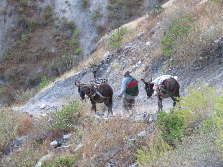 descente à dos d'âne
