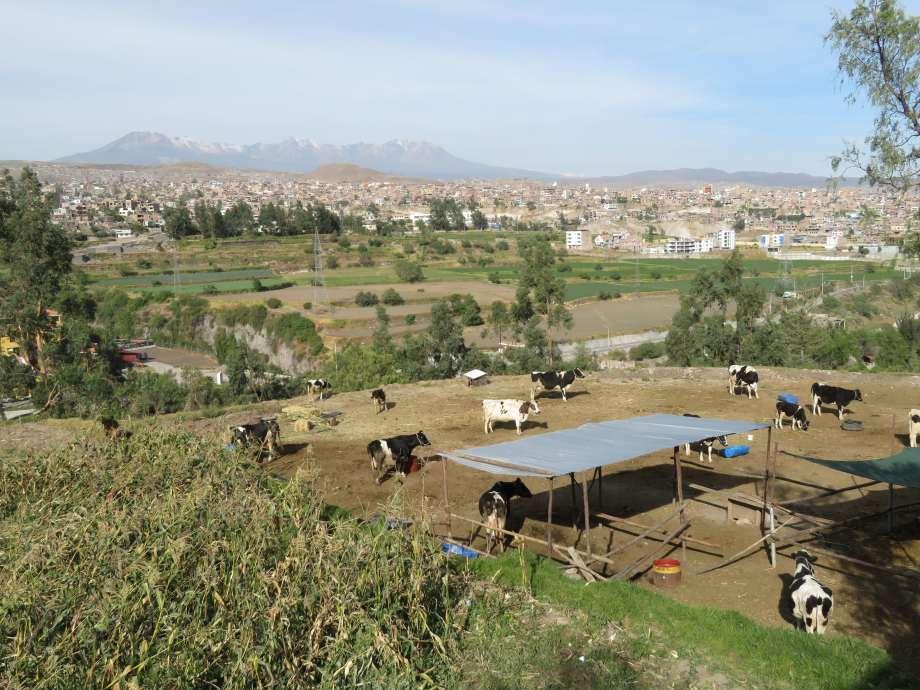 ferme autour d'Arequipa