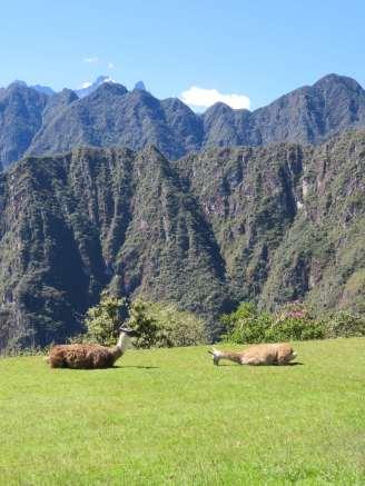 Le Machu Picchu (11)