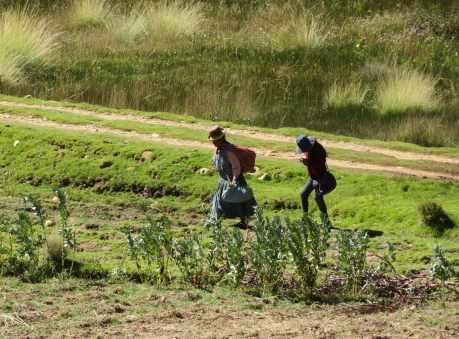 travail des champ