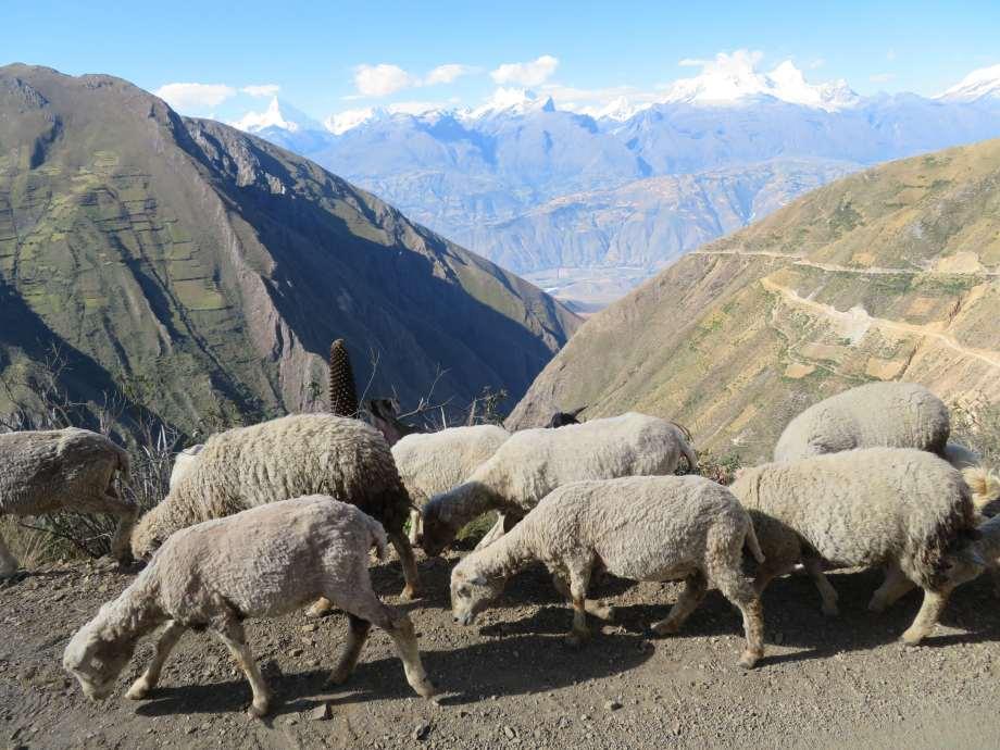 En route vers les waynas (4)