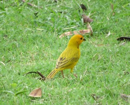 joli oiseau à Guane