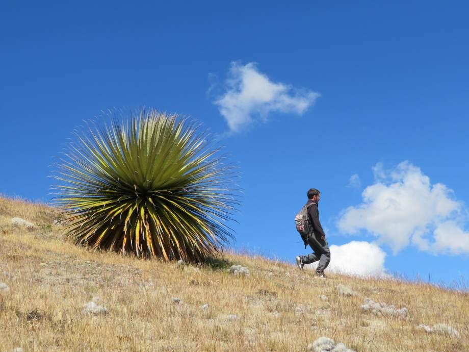 Punta Winchus (9) -