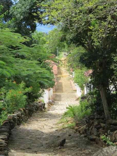 Trek d'el Camino Real (6)