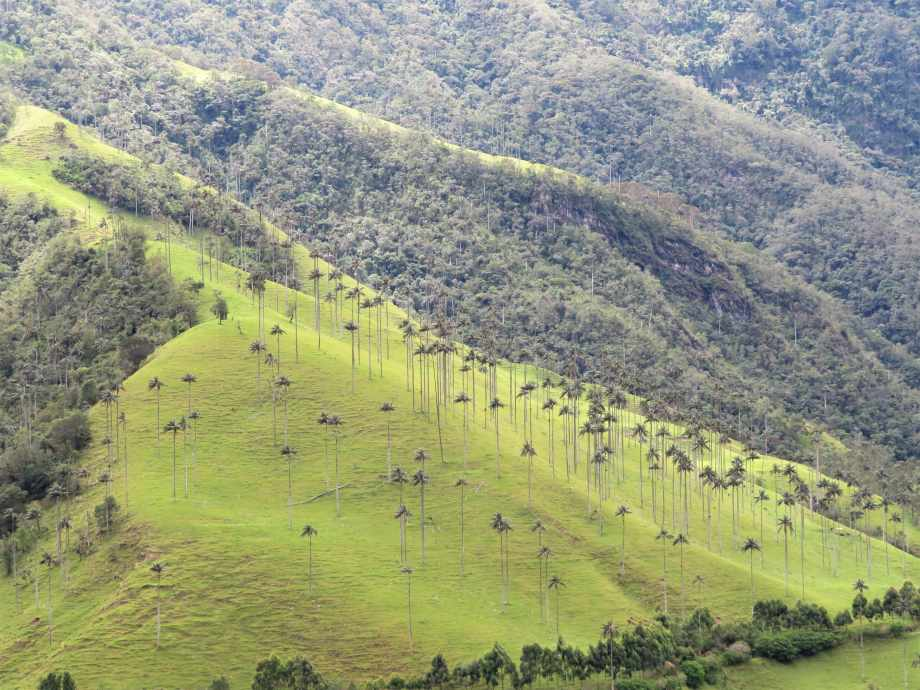 vallée de Cocora (6)