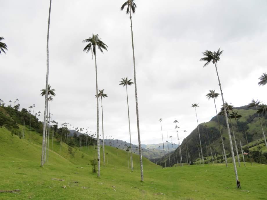vallée de Cocora -