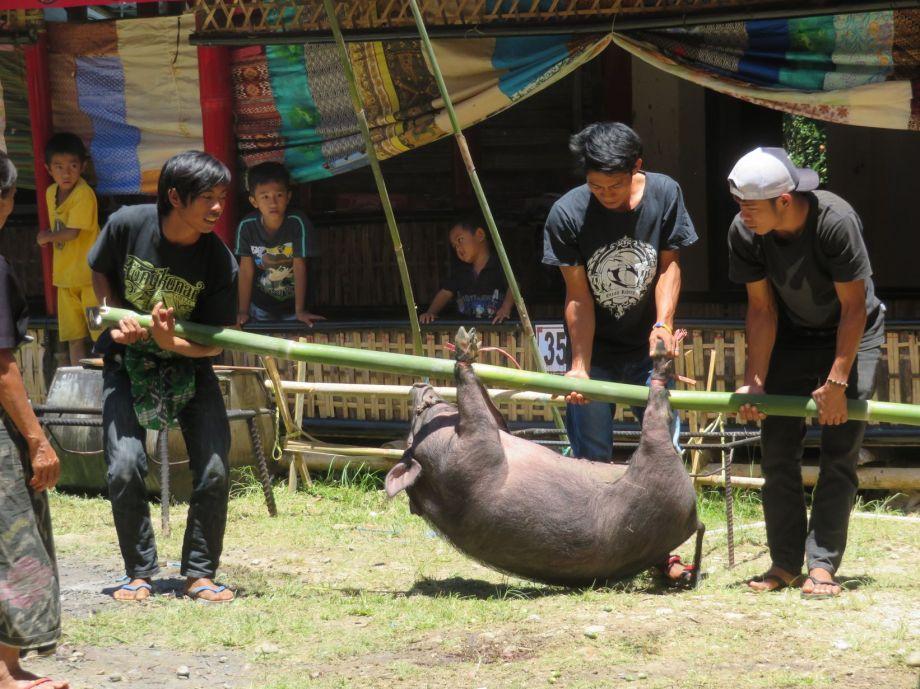 cérémonie Toraja (11)