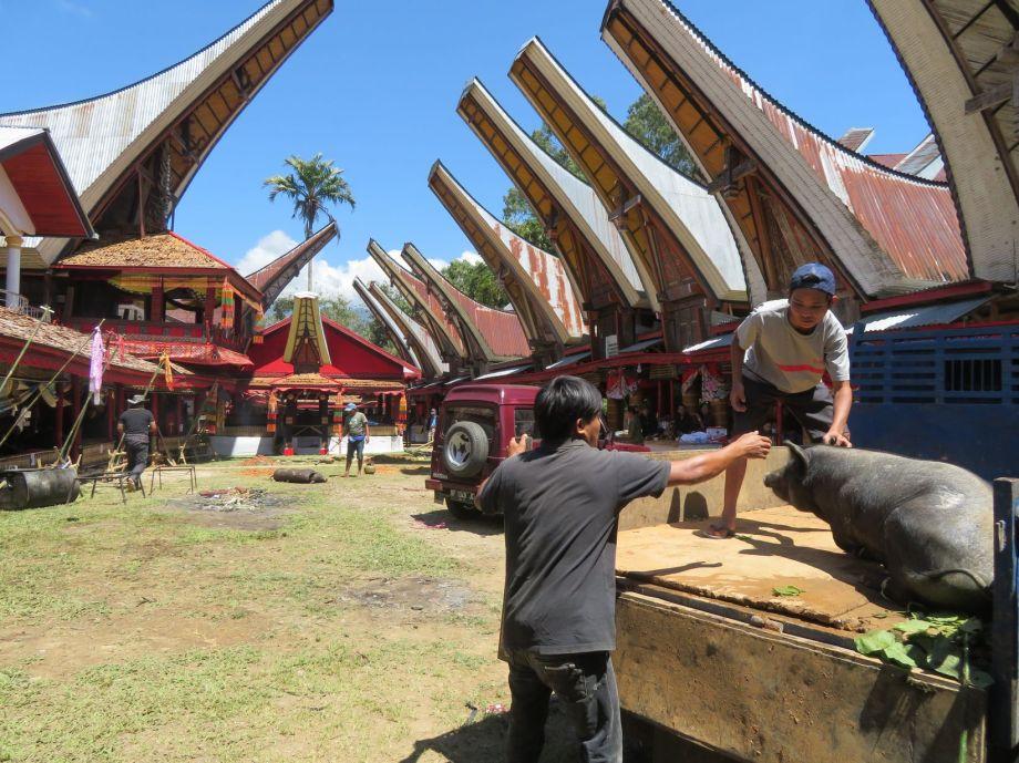 cérémonie Toraja (2)