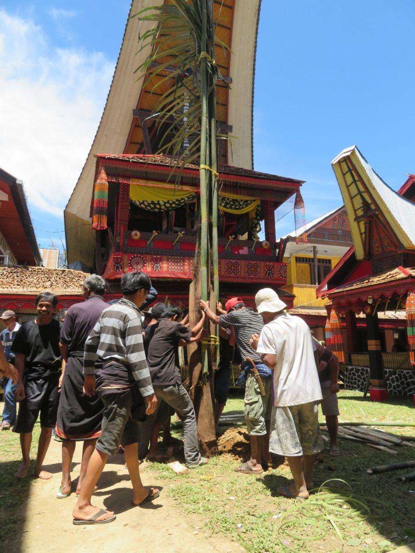 cérémonie Toraja (4)