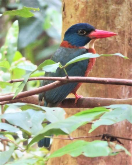 oiseau (2)