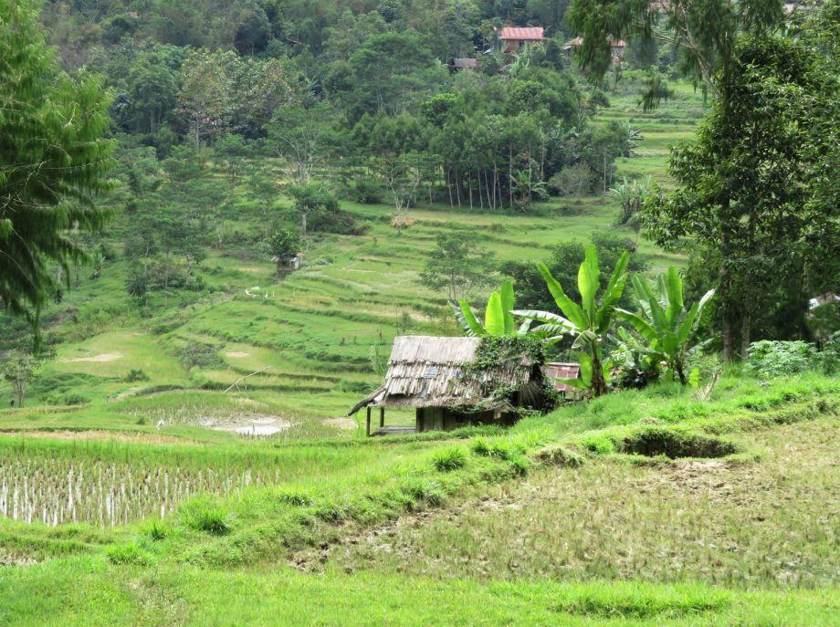 rizières (5)