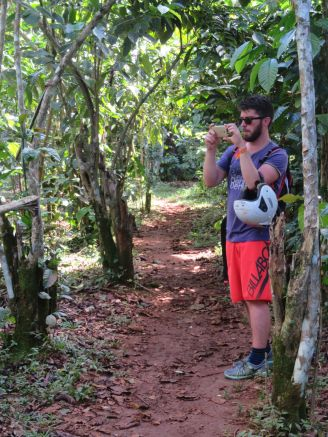 plantations de café (1)