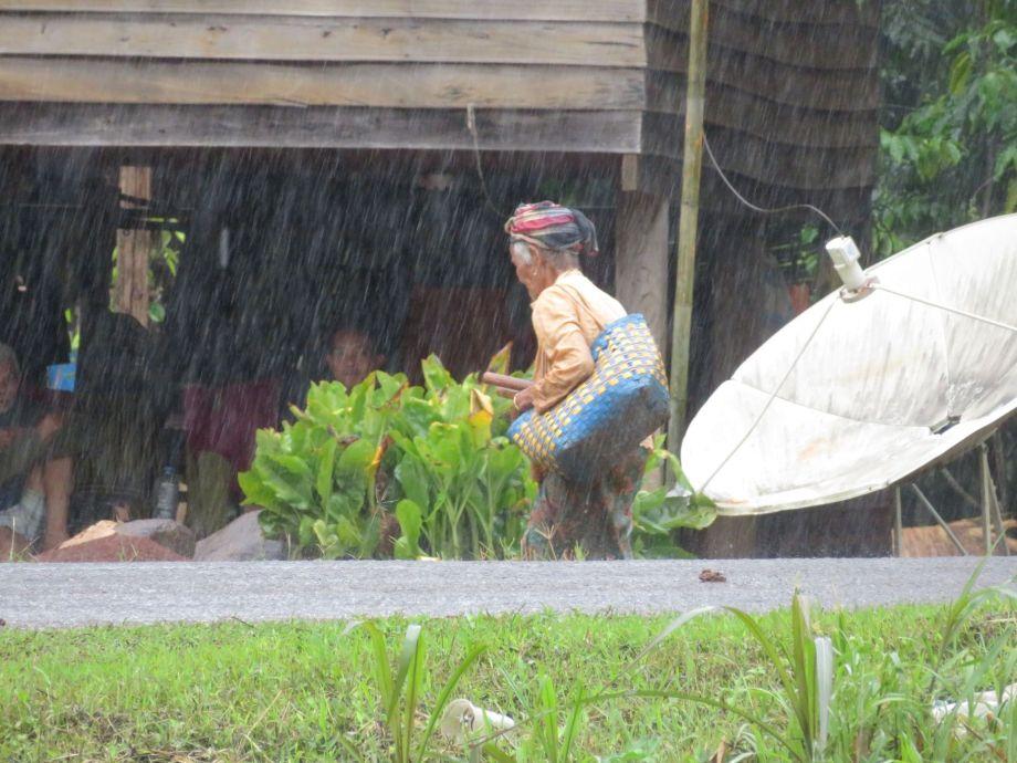 pluie tropicale (1)