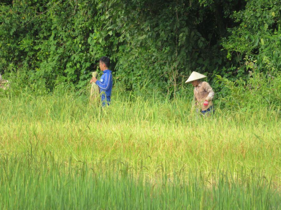 rizières (4)