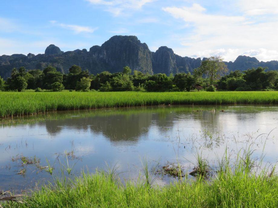 rizières autour de Vang vieng (4)