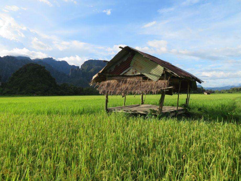 rizières autour de Vang vieng (6)